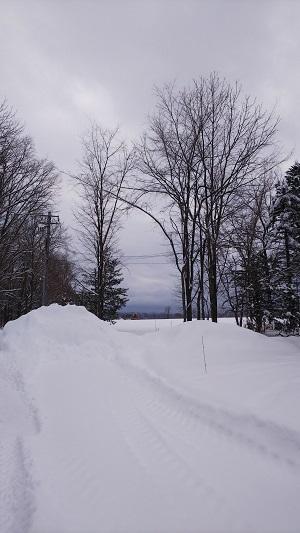 またも大雪です